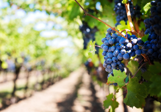 One of Italy's largest winemakers is supported by SCADA