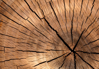 Handling the tough wood supply chain